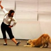Golden retriever and handler performing a choreographed trick