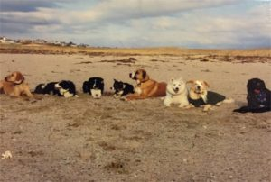 Dogs on field trip on Cape Cod beach