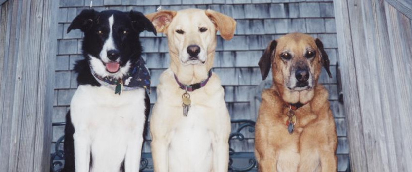 Three dogs side by side