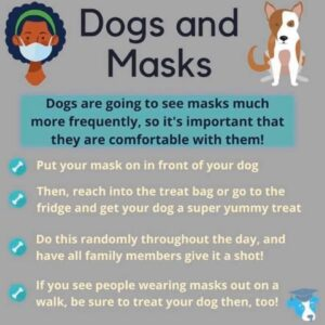 Poster about dogs and masks