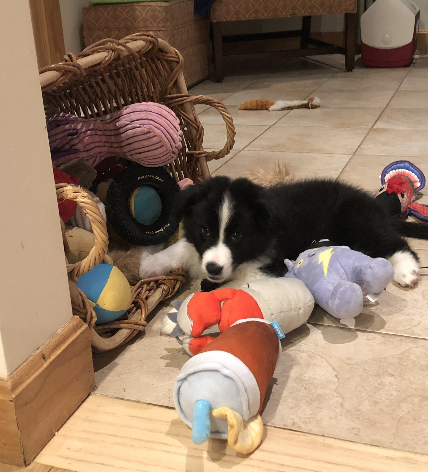 Black and white puppy amid a pile of toys